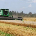 Harvesting the Sharecropper Project wheat field August 2014
