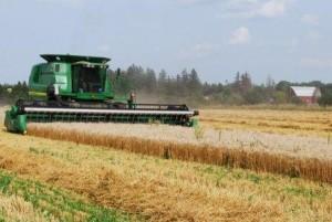 HarvestingWheatAug2014-1