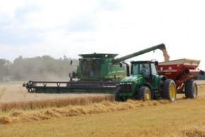 HarvestingWheatAug2014-2