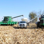 Harvesting the Sharecropper Corn Field November 2015