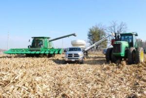 Harvesting the Sharecropper Corn Field November 2015